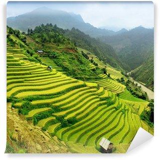 Vinylová Fototapeta Rýžová pole Mu Cang Chai, Vietnam