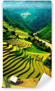 Vinylová Fototapeta Rýžová pole řadových ve Vietnamu