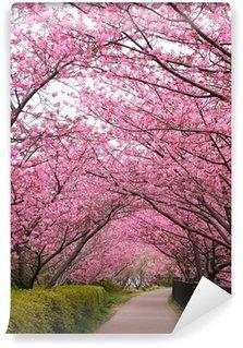 Vinylová Fototapeta Sakura arch