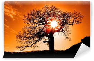 Vinylová Fototapeta Sám strom se sluncem a barev červená oranžová žlutá nebe