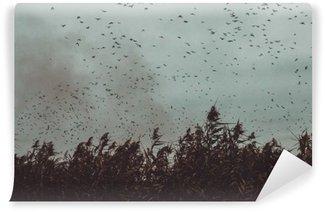 Fototapeta Samoprzylepna Pęczek ptaki latające blisko trzciny w ciemnym sky- stylu vintage black and white