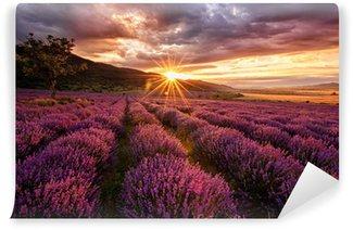 Fototapeta Samoprzylepna Wspaniały krajobraz z lawendowego pola na wschód słońca