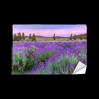 Fototapeta Samoprzylepna Zachód słońca nad polem letnich lavender w Tihany, Węgry