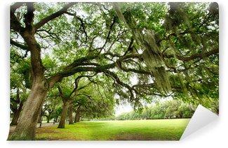 Vinylová Fototapeta Savannah Oaks
