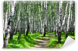 Fototapeta Winylowa Ścieżka w brzozowym lasku