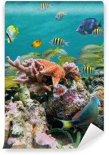 Vinylová Fototapeta Sea-life barvy
