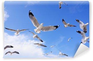 Vinylová Fototapeta Seagulls