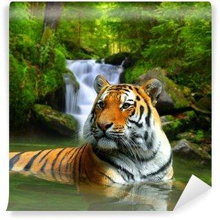 Vinylová Fototapeta Sibiřský tygr ve vodě
