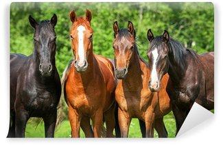 Vinylová Fototapeta Skupina mladých koní na pastvě