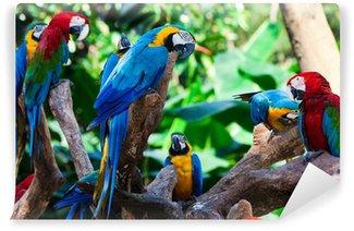 Vinylová Fototapeta Skupina papoušci