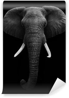 Vinylová Fototapeta Slon africký - Isolated