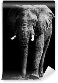 Vinylová Fototapeta Slon izolovaných na černém pozadí