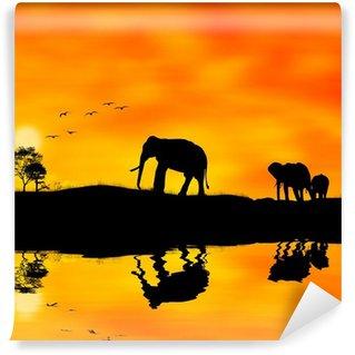 Vinylová Fototapeta Sloni Afrika