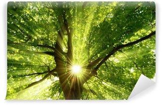 Vinylová Fototapeta Slunce vyzařuje výbušné přes strom