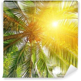 Vinylová Fototapeta Sluneční světlo přes listí palem