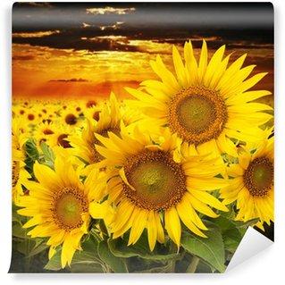 Vinylová Fototapeta Slunečnice na poli a západu slunce