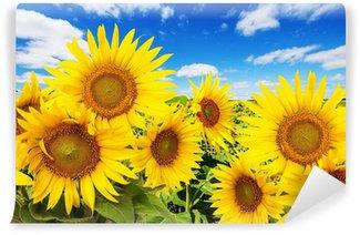 Vinylová Fototapeta Slunečnicové pole a modrá obloha s mraky