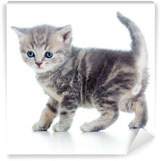 Fototapeta Winylowa Śmieszne walking kitten samodzielnie na białym tle