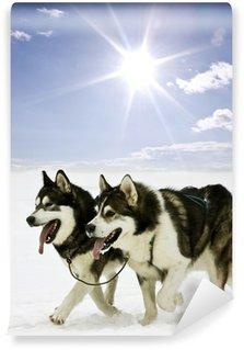 Vinylová Fototapeta Sněhové psi