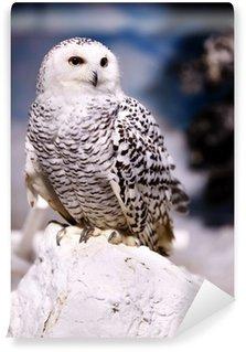 Fototapeta Winylowa Śnieżna sowa