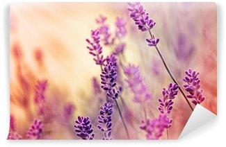 Vinylová Fototapeta Soft zaměření na krásné levandule a sluneční paprsky - sluneční paprsky