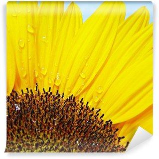 Vinylová Fototapeta Sonnenblume