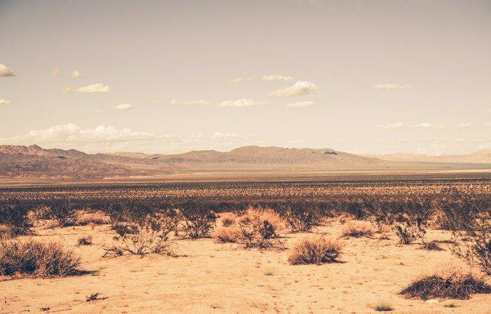 Fototapeta Vinylowa Southern California Desert - Pustynia