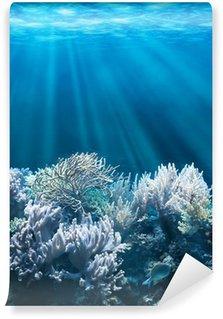 Fototapeta Winylowa Spokojne podwodne sceny z miejsca kopiowania