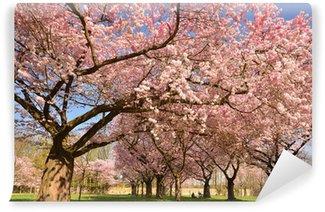 Fototapeta Vinylowa Spring: obfitość japońskich wiśni