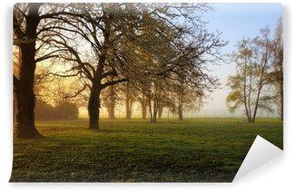 Fototapeta Vinylowa Spring sunrise