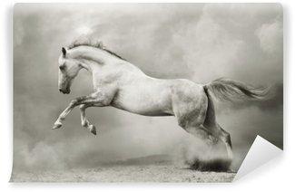 Fototapeta Vinylowa Srebrno-biały ogier na czarno