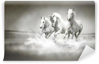 Vinylová Fototapeta Stádo bílých koní běží přes vodu