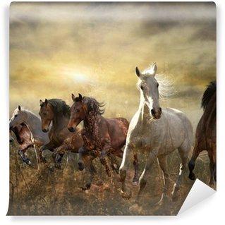 Vinylová Fototapeta Stádo koní cval zdarma při západu slunce