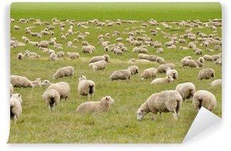 Vinylová Fototapeta Stádo ovcí na Novém Zélandu