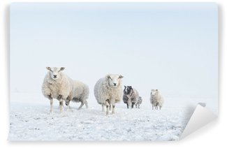 Vinylová Fototapeta Stádo ovcí stojící ve sněhu