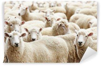 Vinylová Fototapeta Stádo ovcí