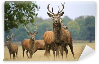 Vinylová Fototapeta Stádo Red Deer jeleny a to na podzim podzim louku