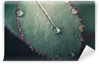 Vinylová Fototapeta Stan Drops on Tkhe čerstvých zelených klauna. makro