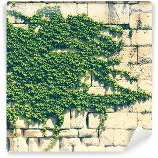 Vinylová Fototapeta Stará kamenná zeď se zeleným břečťanem