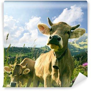 Vinylová Fototapeta Šťastné krávy