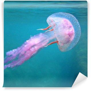 Vinylová Fototapeta Středomoří medúzy v blízkosti povrchu