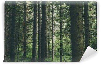 Vinylová Fototapeta Stromy v lese