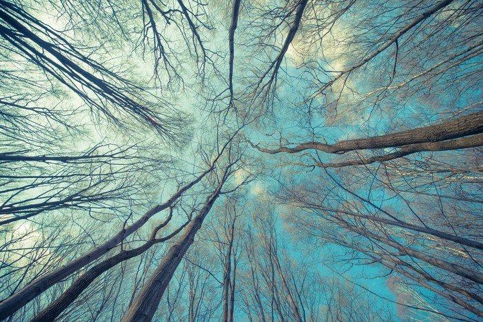Vinylová Fototapeta Stromy Web Background - Vinylová Fototapeta