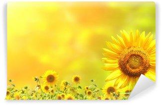 Vinylová Fototapeta Sunflowers