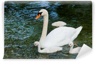 Vinylová Fototapeta Swan se mláďata. Labuť velká rodina. Krásná mladá labutě v LA