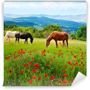 Vinylová Fototapeta Tam koně pasoucí trávě
