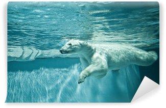 Vinylová Fototapeta Thalarctos maritimus (Ursus maritimus) - Lední medvěd