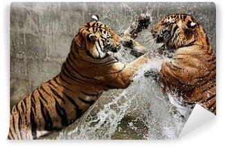 Vinylová Fototapeta Tiger bitva