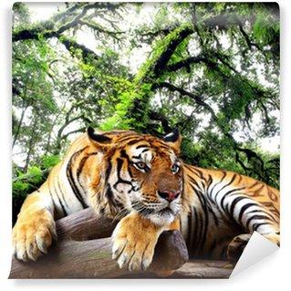 Vinylová Fototapeta Tiger hledá něco na skále v tropických stálezelených lesů