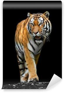 Vinylová Fototapeta Tiger na černém pozadí